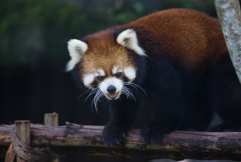 台北木柵動物園