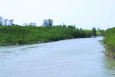 塭子頭紅樹林生態保護區