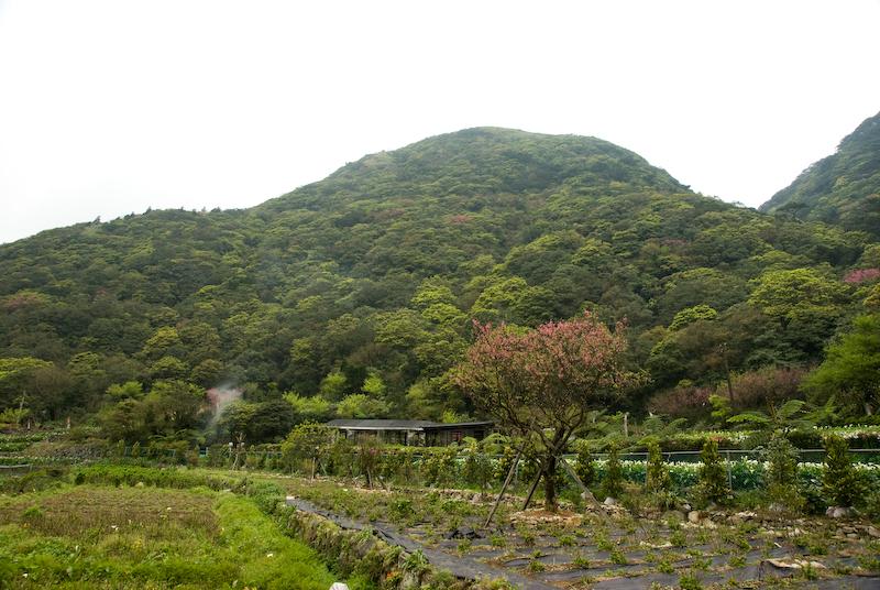 陽明山系列-竹子湖