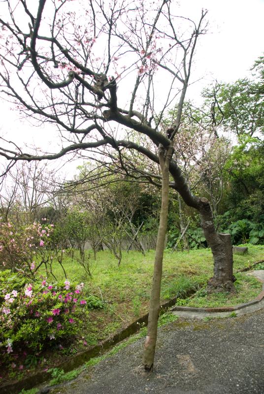 台北市陽明山花卉試驗中心