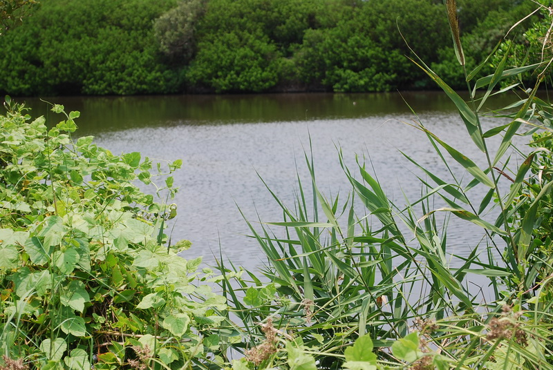 永安濕地自然公園