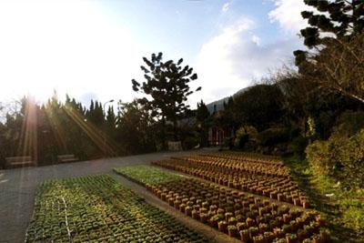 陽明山系列-陽明公園
