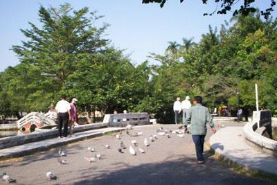 屏東中山公園南島綠光森林