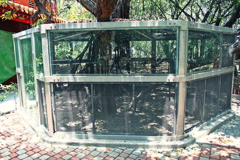 十二佃神榕公園