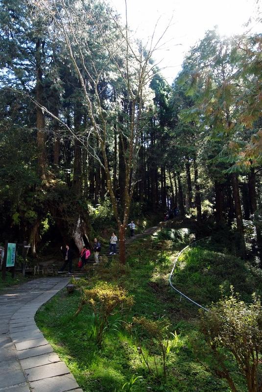 阿里山系列-姐妹潭步道