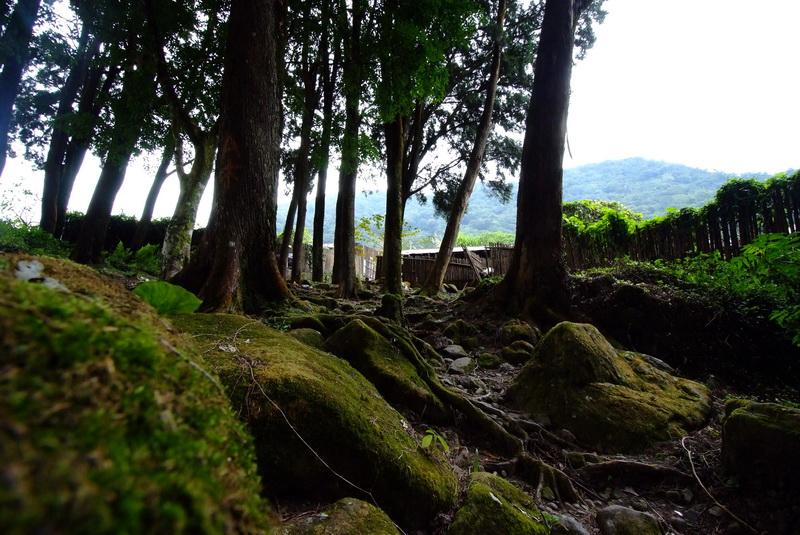 阿里山系列-奮起湖