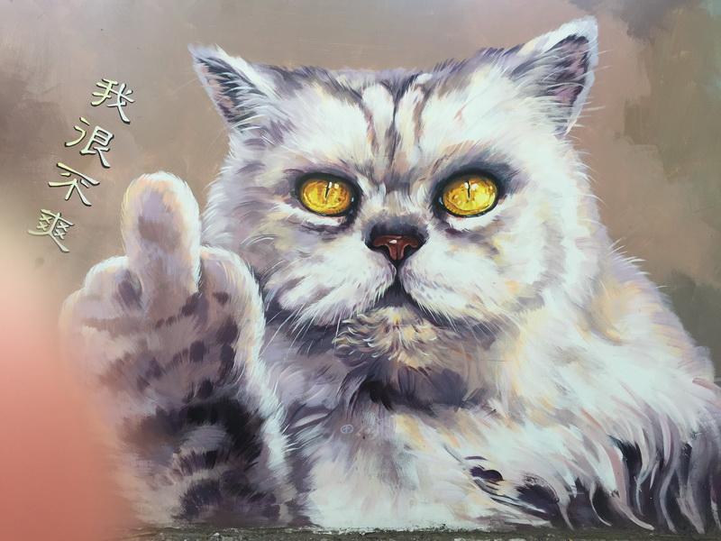 嘉義菁埔貓世界♬