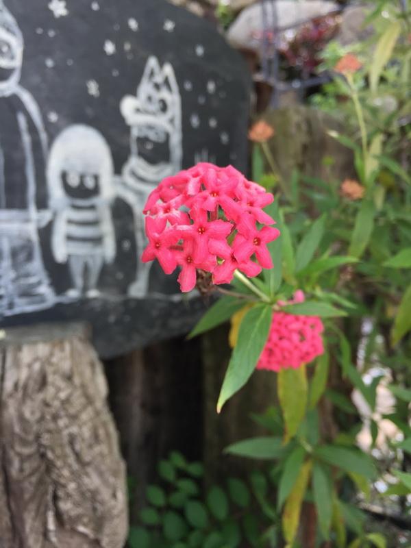 嘉義市圓林仔社區-客家油桐花