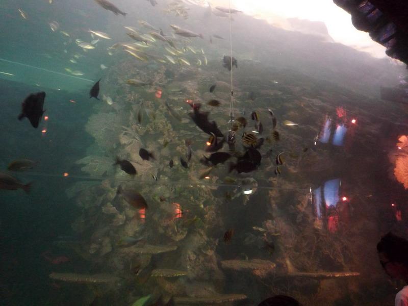 澎湖系列-澎湖水族館