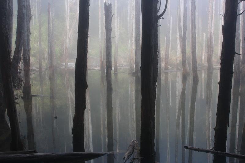 忘憂森林♬