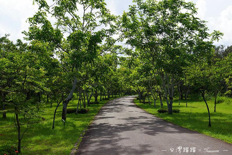 台東 森林公園步道