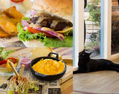 【高雄│ 描Cafe X 屋 Brunch】貓奴們看這裡!一起享受美食一起瞄嗚~吧!