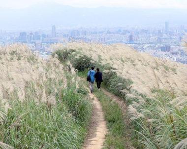 【新北│三角埔頂山】賞芒秘境,步履山脊,置身滿山芒草的秋季詩意!