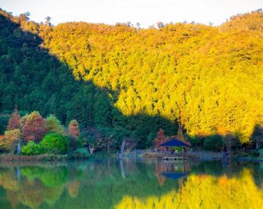 【宜蘭│ 森呼吸】力麗馬告生態園區。宛如台灣阿爾卑斯山的森林美地!