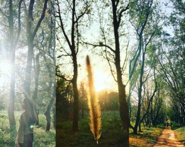 【苗栗│森呼吸】高聳筆直的楓香林延綿成列,漫步其中,感受空靈孤寂的清悠。