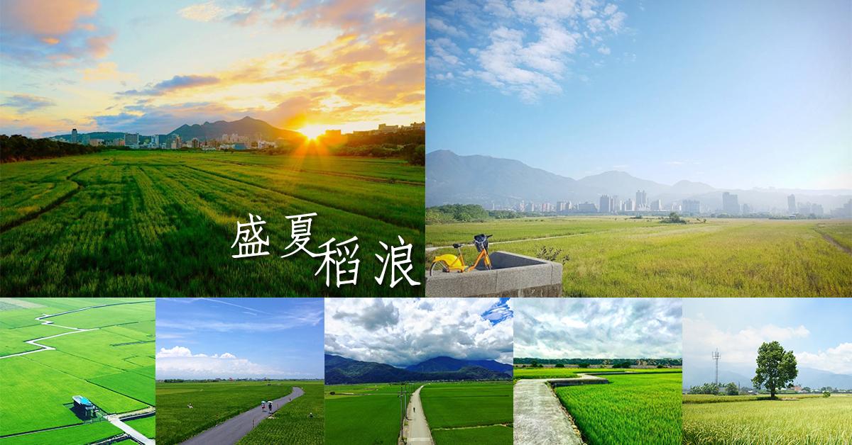 【盛夏稻浪】統整台灣6處賞稻地點,尋找童年的鄉野記憶,一望無際的翠綠稻田在這裡!