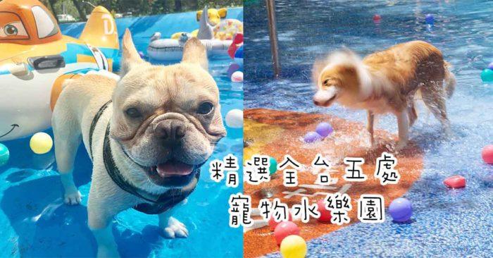 【夏季の日常│游珊玩水】寵物也要過夏天!精選全台五處寵物水樂園!趕快帶著毛小孩來清涼一下~