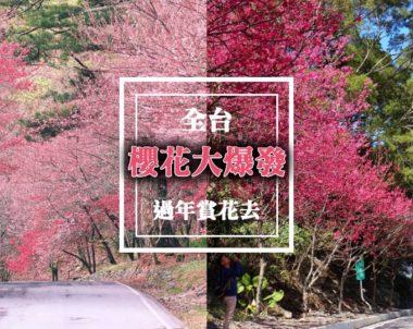 【熱門|旅遊】寒流催熟~櫻花大盛放!全台賞櫻地圖!