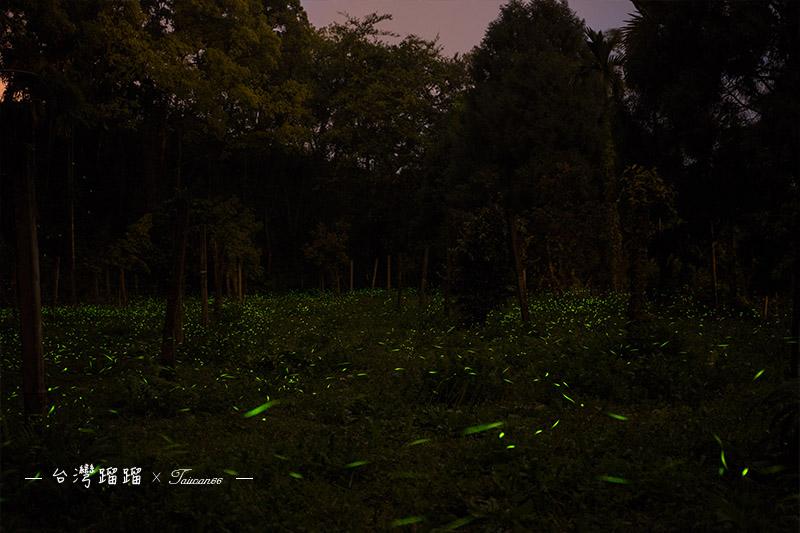 那瑪夏螢火蟲